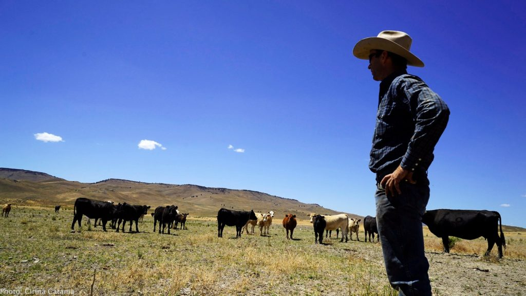 Rancher Travis Williams checks on his herd at the Dash W Bar Ranch in Harney County, Oregon (photo by Cirina Catania)